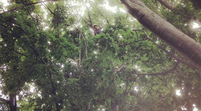 Cristiano_trees