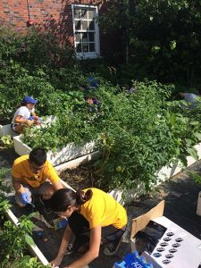 Students volunteering at a garden